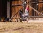 Conseils pour se lancer dans un élevage de poule